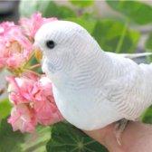 Як навчити хвилястого папугу сідати на руку