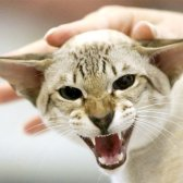 Як створити розплідник кішок