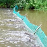 Як ставити мережі на річці