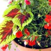 Як прикрасити будинок квітами