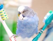 Як мити птахів