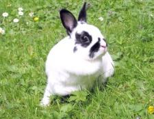 Як спіймати кролика