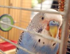 Як лікувати птахів