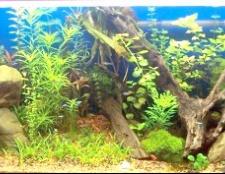 Як відстоюваті воду для акваріума