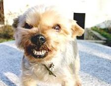 Як почистити собаці зуби