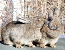 Як розпізнати кроликів