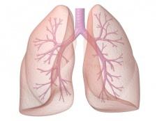 Як розробити легені
