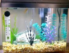 Як прикрасити акваріум