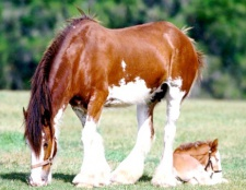Як завести коня