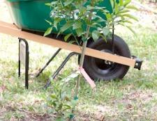 Як садити плодові дерева