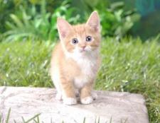 Як придумат кошеняті забавну кличку