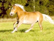 Як зрозуміти коня