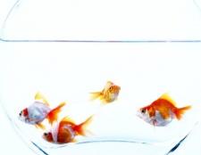 Як зробити воду в акваріумі Прозоров