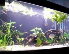 Як поміняти воду в акваріумі