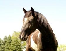 Як прівчіті коня