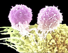 Як підвищити рівень лейкоцитів