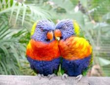 Як зробити будиночок для папуг