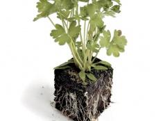 Як виростити зелень на підвіконні
